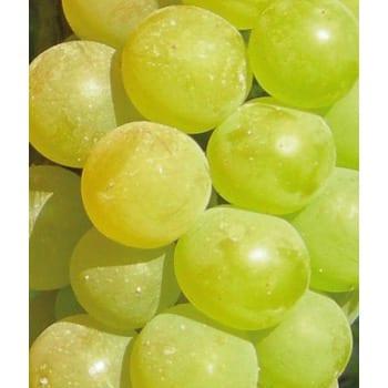 Grapevine Refren 2L
