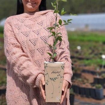 Gift seedling Clematis Heather Herschell 2L