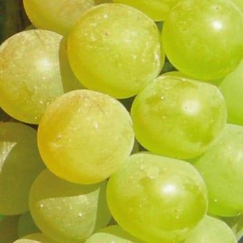 Grapevine Refren 1L