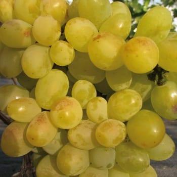 Виноград Аркадия 1L