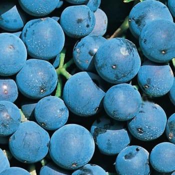 Grapevine Alwood 1L